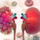 CBD for Kidneys