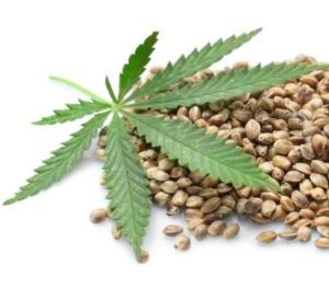Hemp Seeds With Leaf
