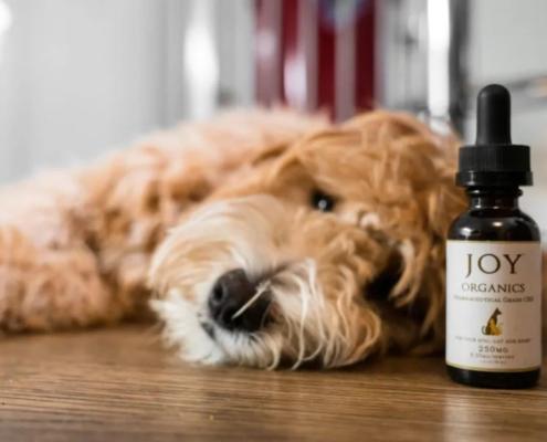 Joy Organics CBD For Pets