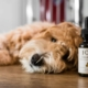 Joy Organics CBD For Pets