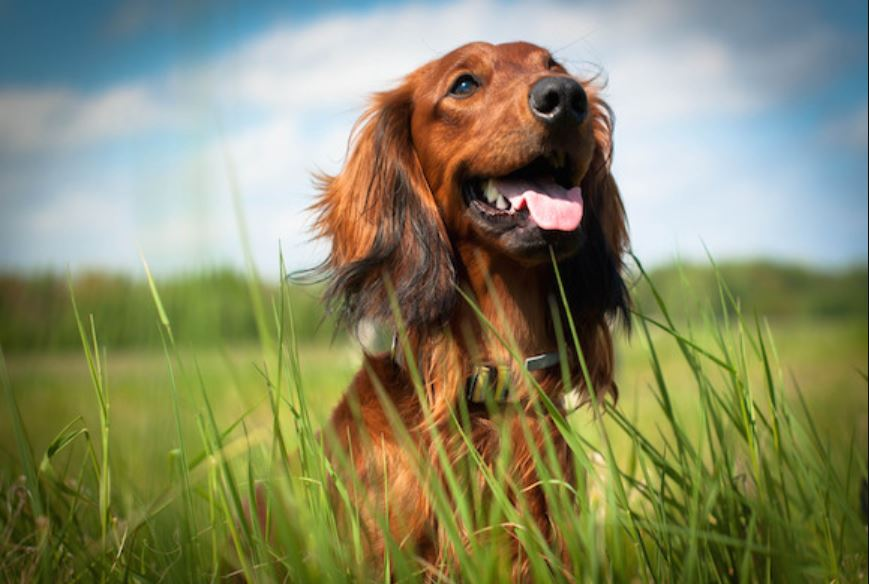 CBD For Dogs Image
