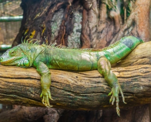 CBD For Reptiles