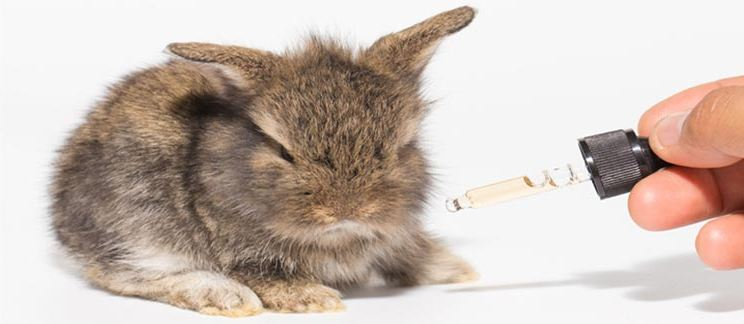 Cbd for rabbit