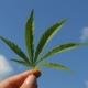 Hemp Leaf For Sustainability