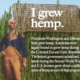 Washington And Jefferson Grew Hemp