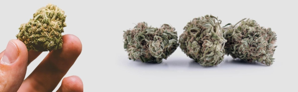 CBD vs Weed Buds