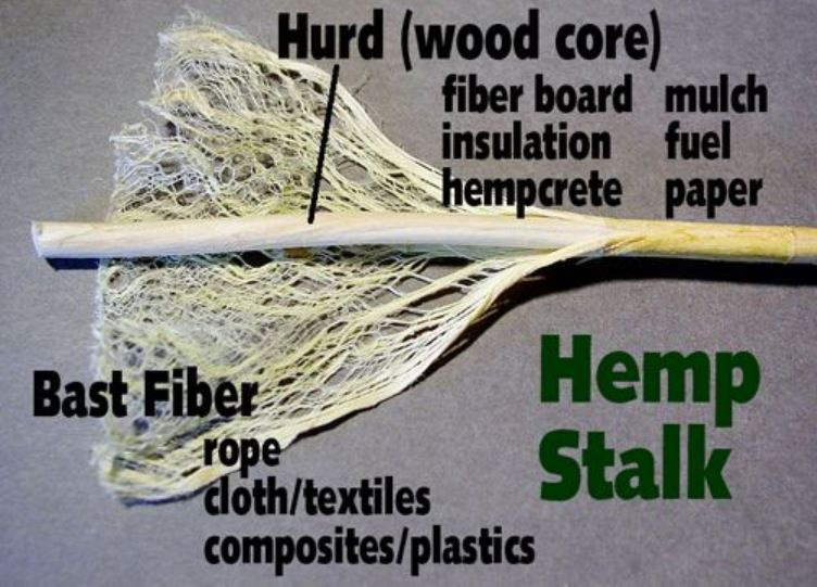 Hemp Stalk Image 1